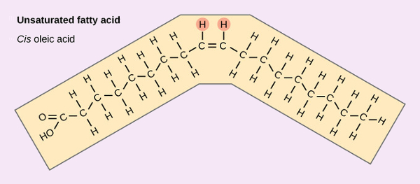 "Unsaturated fatty acids have double bonds, which cannot spin. This means there are two possible orientations. The healthy ""Cis-"" orientation has both hydrogen atoms on the same side causing a bend in the chain. This bend fits the shape of our natural enzymes and is easy to digest."