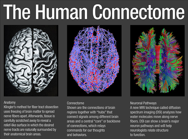 For centuries, attempts attempts have been made to map the human brain. Now the roads are a lot clearer.
