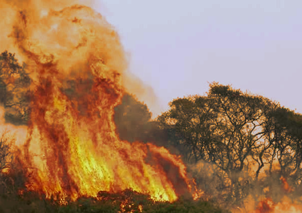 Fires have devastated wildlife and neighborhoods alike in the San Francisco North Bay Area.