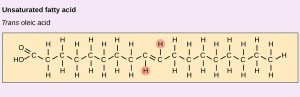 Trans-fats have the hydrogen atoms on opposite sides of the double bond. The result is a straighter molecule that tends to plug up our natural enzymes causing health problems. Since this shape is not found in nature, our bodies are not equipped to digest them.